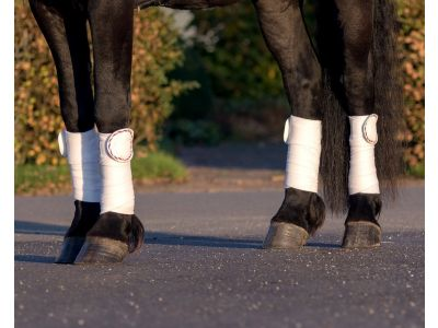 Bandage patches Q Friesian