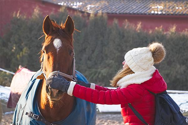 Hoe doe je een paard een deken om?