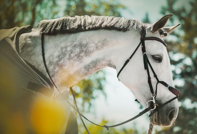 Wanneer heeft een paard een zweetdeken nodig?