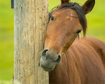 Paard schuurt hoofd… wat nu?