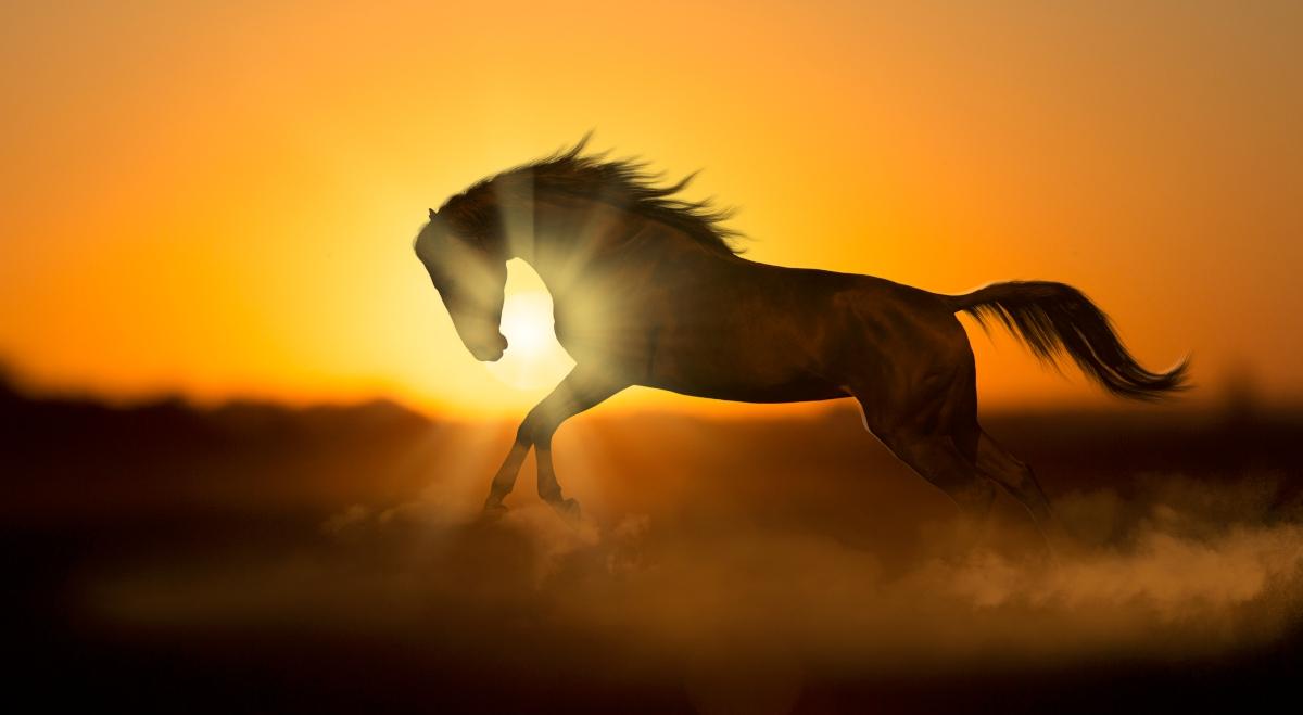 Ook paarden kunnen verbranden