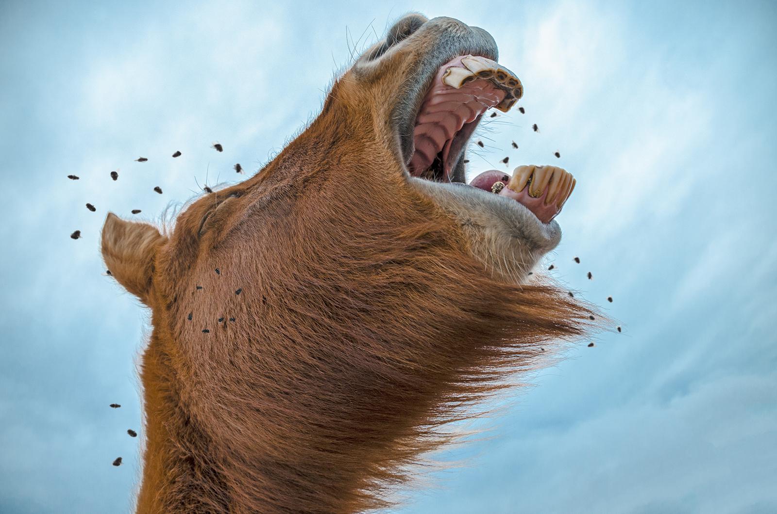 Mijn paard wordt gek van vliegen!