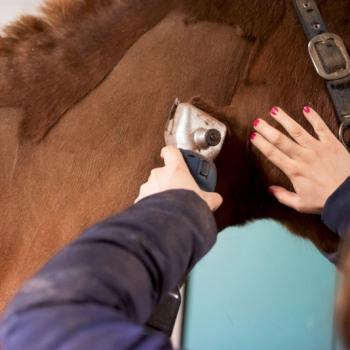 Wanneer moet ik mijn paard scheren?